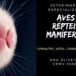 Veterinária Silvestres-São Paulo-Domic-Aves,Mamíferos,Répteis-Hotel,Exam,Cirurgia,Sexagem